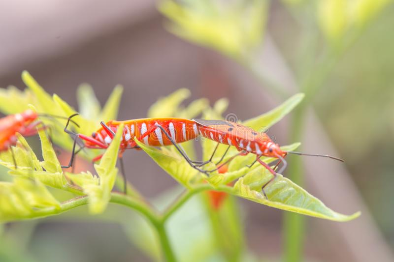 Mating insect And nature and morning light stock images