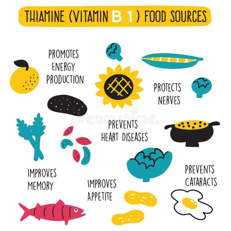Matkällor för vitamin B 1, thiamine Illustration och information om vektortecknad film om vård- fördelar av vitamin B 1 royaltyfri illustrationer