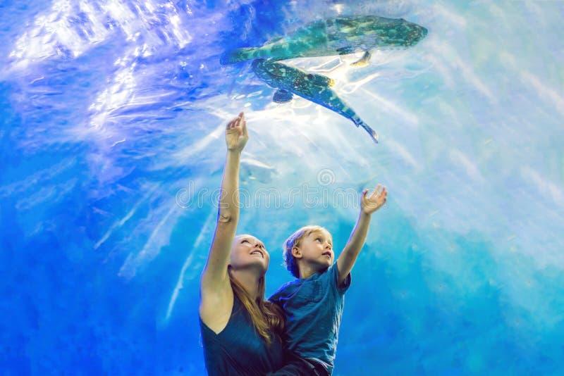 Matka i syn patrzeje ryba w tunelowym akwarium fotografia stock