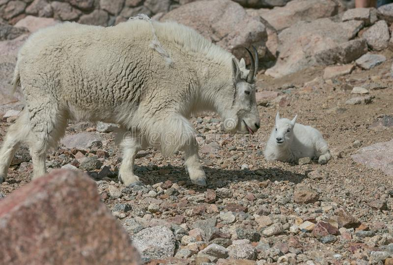 Matki i dziecka Halne kózki obraz stock