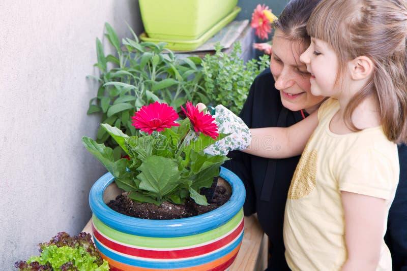 Matki i dziecka ogrodnictwa kwiatu roślina obraz stock