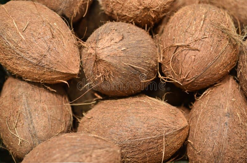 Matkokosnötbakgrund Nya kokosnötter mönstrar till salu i marknad Jordbruk och fruktprodukt Selektivt fokusera fotografering för bildbyråer