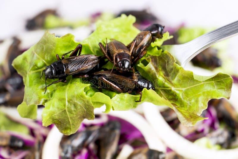 Matkryp: Syrsakrypet som stekas för att äta som matobjekt på skeden och i salladgrönsaken, är det den ätliga bra källan av protei arkivfoton