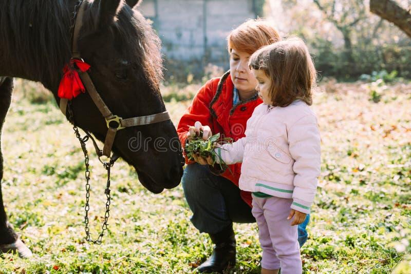Matning av en häst fotografering för bildbyråer