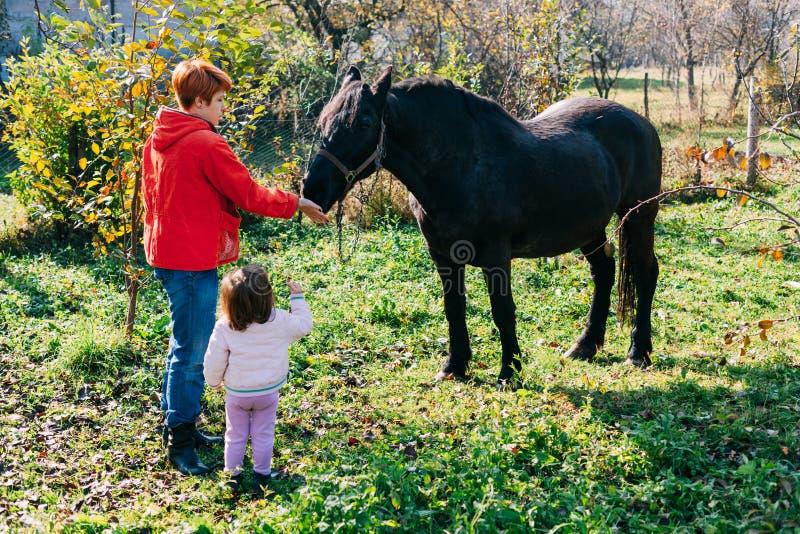 Matning av en häst arkivfoton