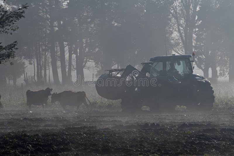 Matning ut i dimman royaltyfri foto