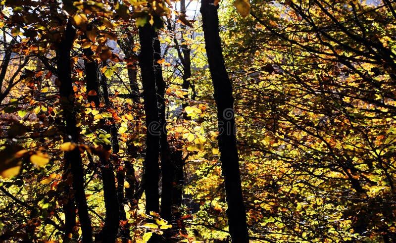 Mato maravilhoso, no outono, contraste alto fotografia de stock royalty free