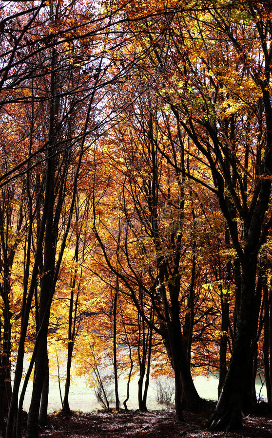 Mato maravilhoso, no outono, contraste alto fotografia de stock