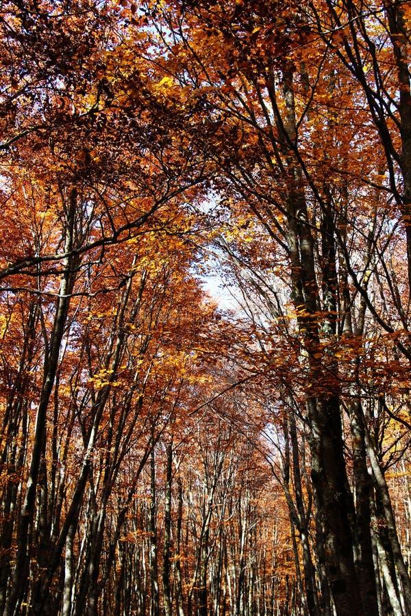 Mato maravilhoso, no outono, contraste alto imagens de stock royalty free