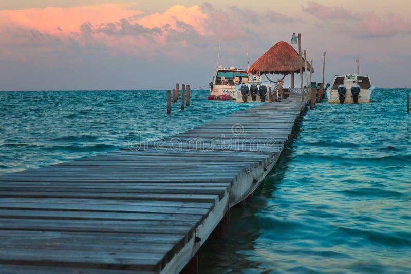 Matoir Belize de Caye image libre de droits