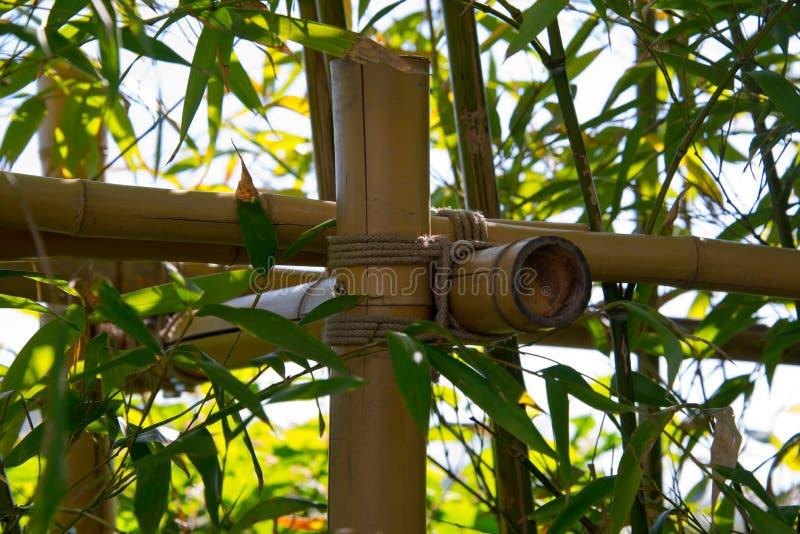 Matorral de bambú, lanzamientos, hojas imagen de archivo libre de regalías