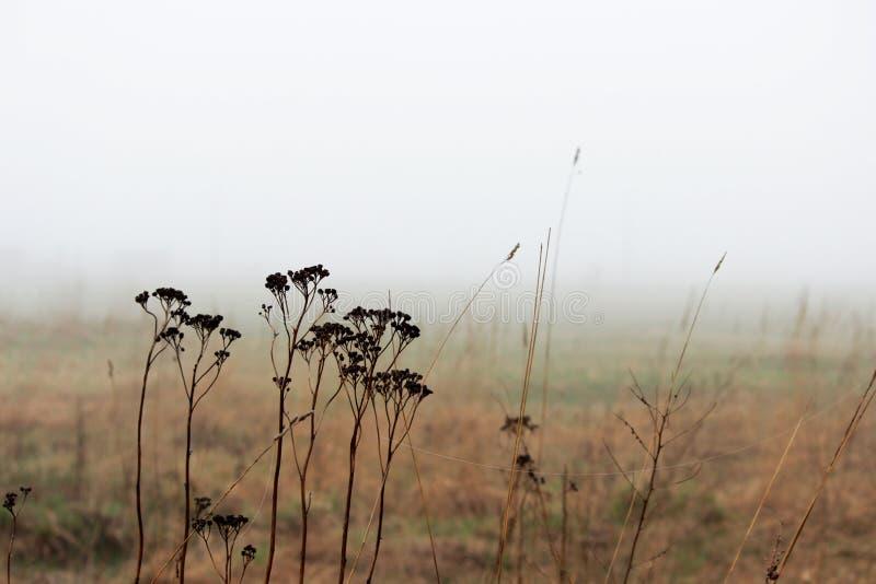 Matorrales de la hierba en la niebla en una parcela vacante en la primavera temprano por la mañana imagen de archivo libre de regalías