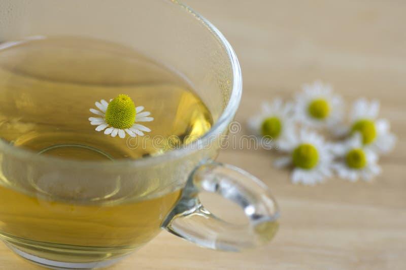 Matricaria chamomilla Blumen und trasparent Tasse Tee auf Holztisch, Kräutermedizin neuen Blühens lizenzfreie stockfotografie