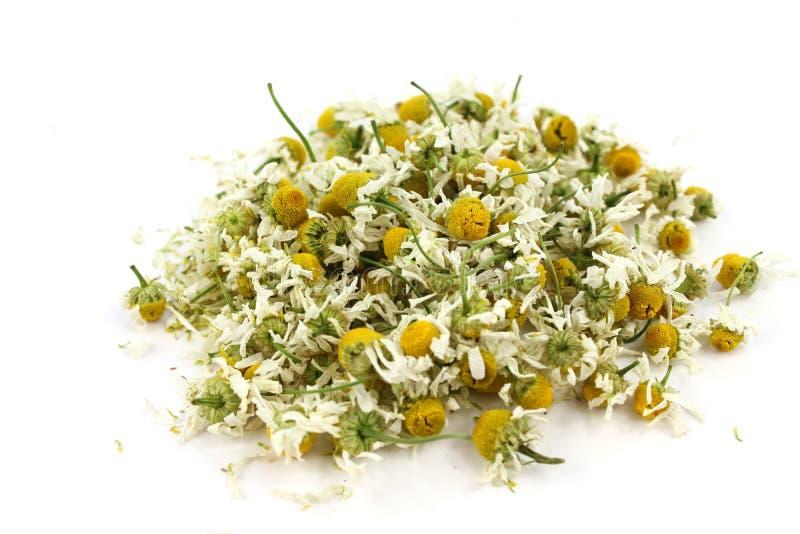 Matricaria chamomilla, camomilla medica secca fotografia stock