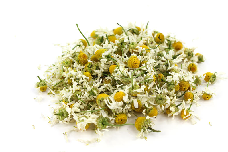 Matricaria chamomilla, medical chamomile dried stock photo
