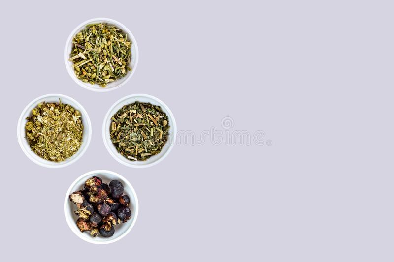 Wild chamomile, Common yarrow, Melissa, Rosehip fruit used in traditional medicine royalty free stock photo