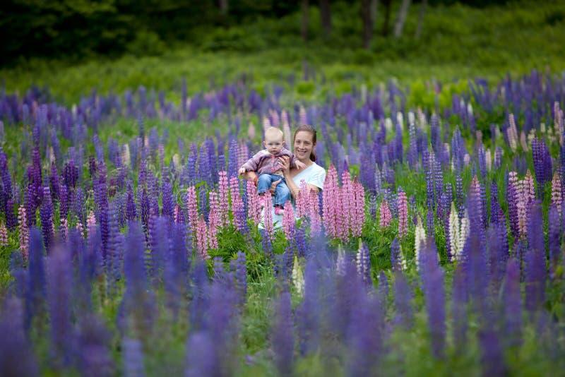 Matriz & filha no campo de flores do Lupine imagem de stock royalty free