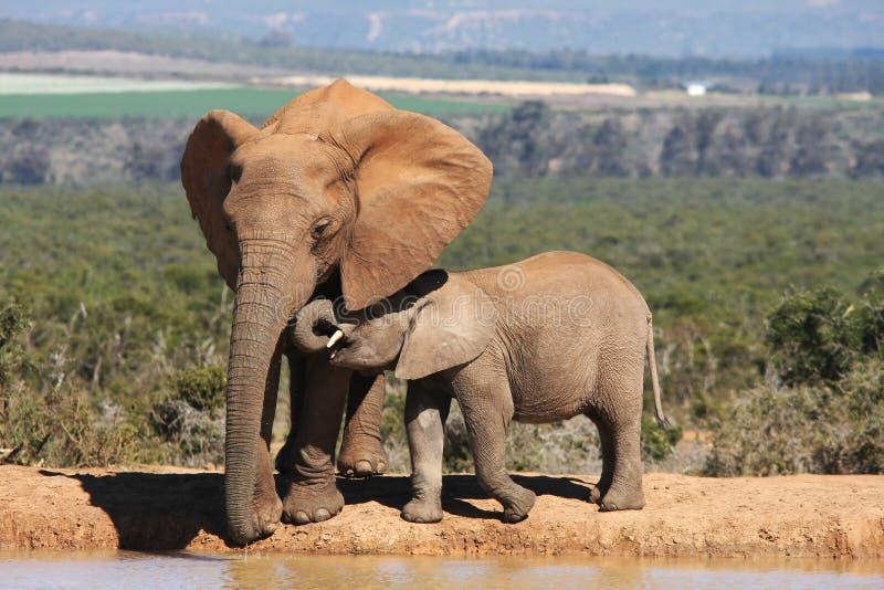 Matriz e bebê do elefante fotos de stock royalty free