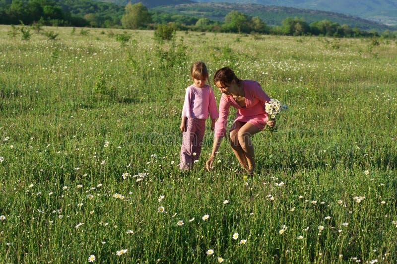 Matriz e filha no prado imagens de stock