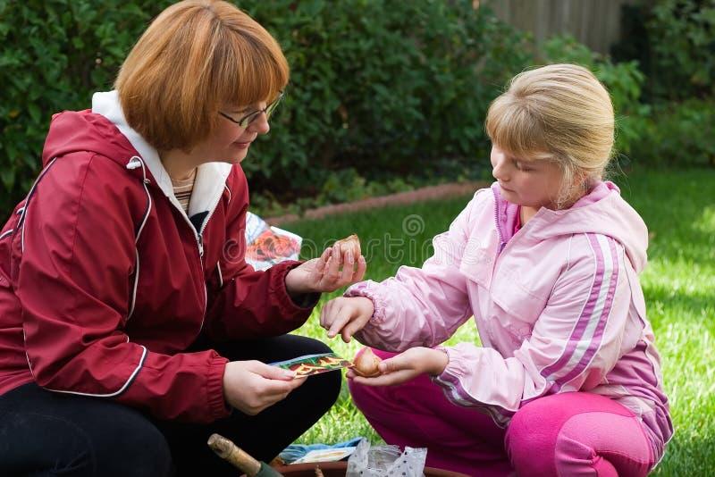 Matriz e filha que plantam tulips imagens de stock royalty free