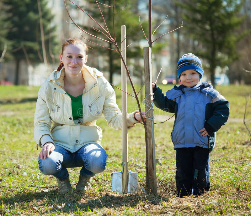 Matriz e filho que plantam a árvore imagem de stock