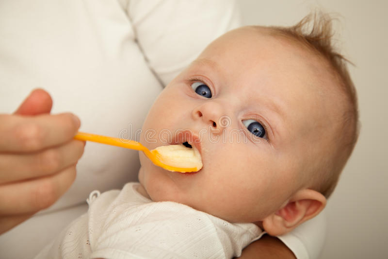 Matriz que alimenta o filho recém-nascido imagens de stock royalty free
