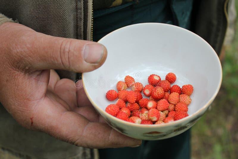 Matrycuje z jagod truskawkami w ręce fotografia royalty free