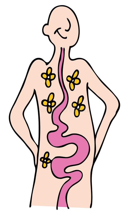 matsmältninghälsa vektor illustrationer
