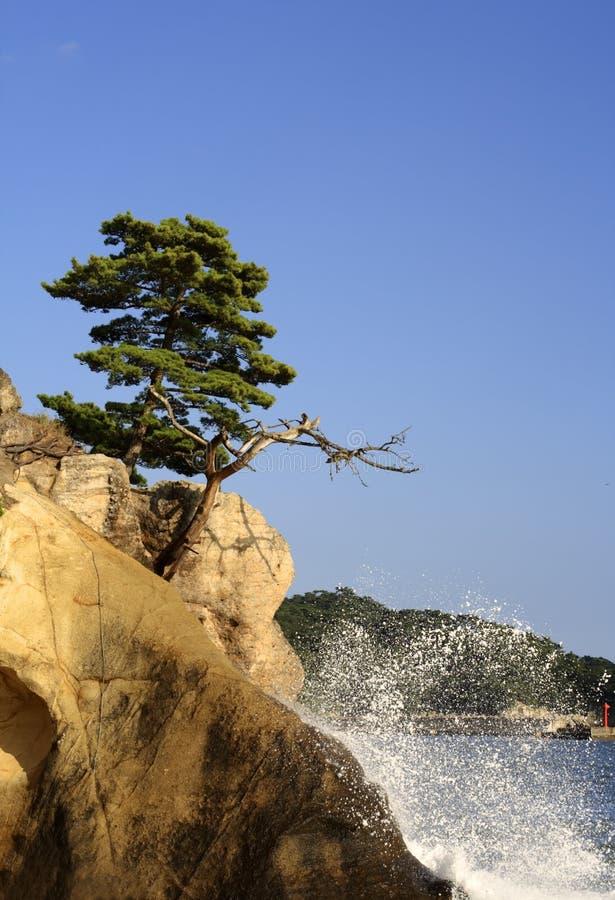 matsushima fotografia royalty free