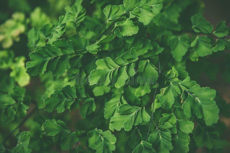 Matta av ormbunkar för tropiska växter, sommarvårbakgrund, stylishly tonad modell av djungel arkivfoton