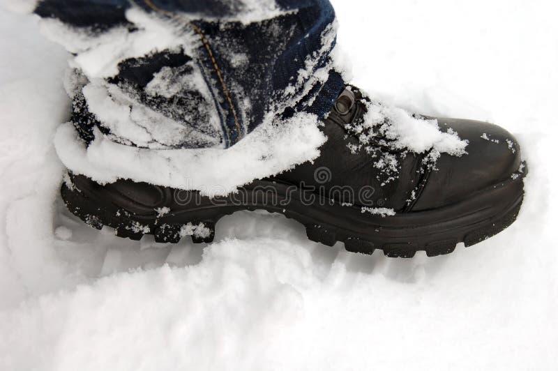 Matte im Schnee stockbilder