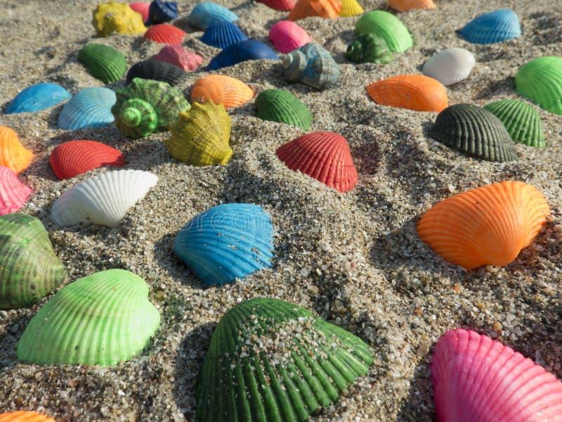 Matte zeeschelpen in het zand royalty-vrije stock afbeelding
