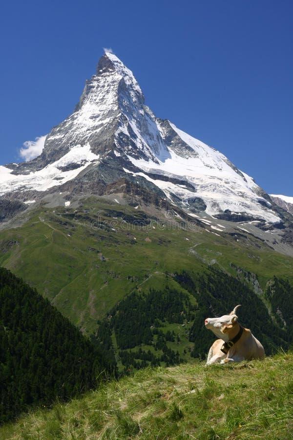 Matterhorn en een Koe royalty-vrije stock afbeelding
