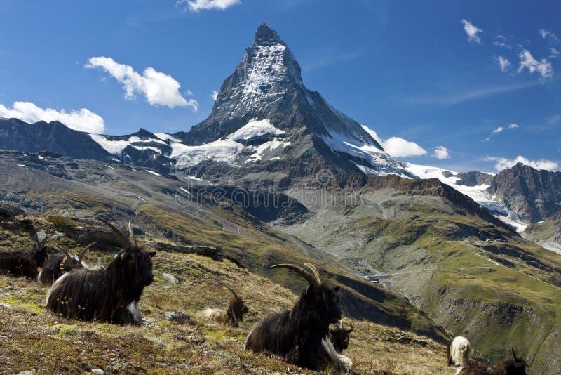 Matterhorn Switzerland Royalty Free Stock Photos