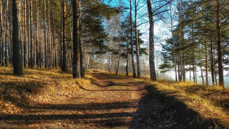 Mattina in anticipo di autunno fotografie stock libere da diritti