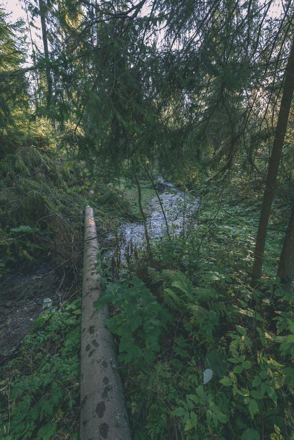 Mattina bagnata nebbiosa nel legno foresta con i tronchi ed il giro di albero immagini stock