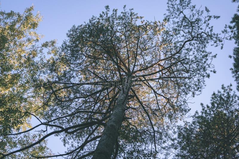 Mattina bagnata nebbiosa nel legno foresta con i tronchi ed il giro di albero fotografia stock