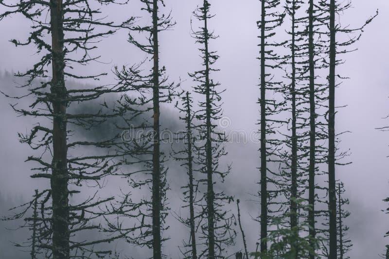 Mattina bagnata nebbiosa nel legno foresta con i tronchi ed il giro di albero fotografie stock libere da diritti