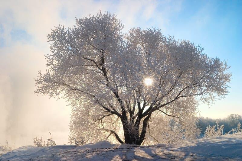 Mattina congelata fotografia stock
