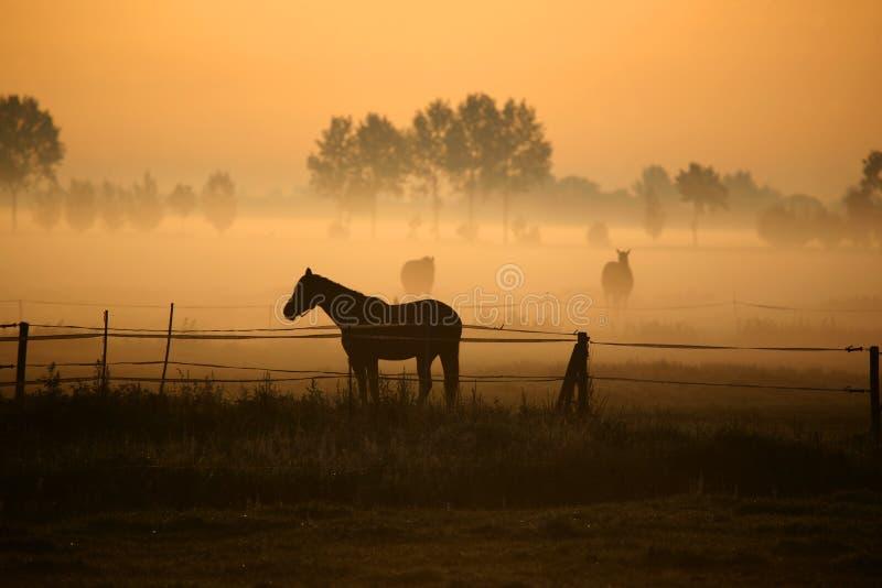 mattina del cavallo della nebbia fotografie stock libere da diritti