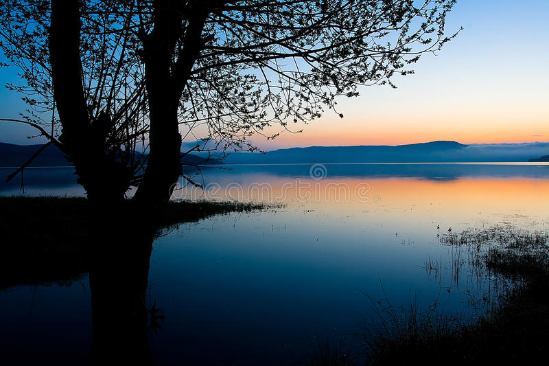 Mattina dell'azzurro dell'albero fotografie stock