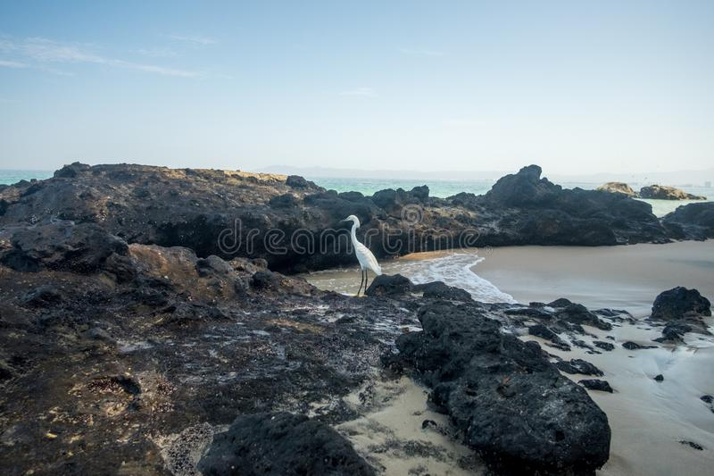 Mattina di estate alla spiaggia di Punta Negra immagini stock libere da diritti