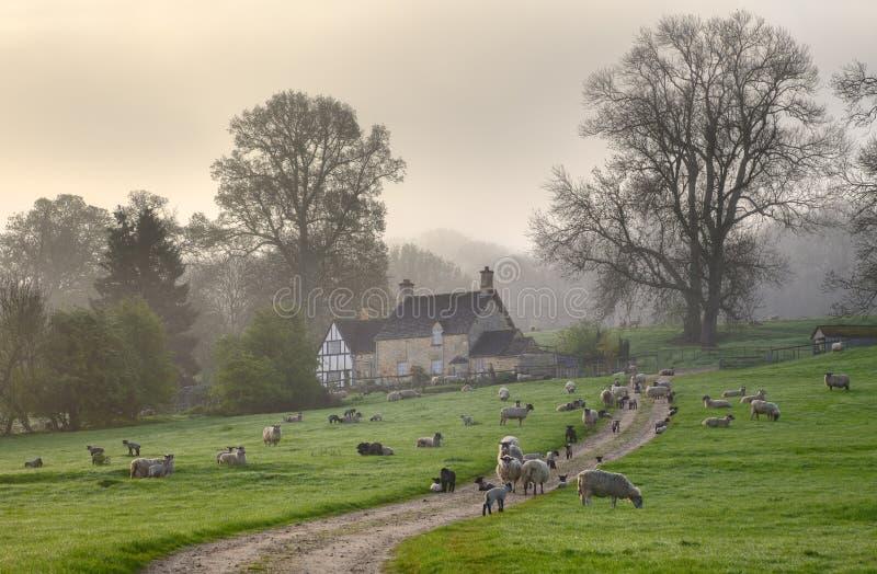 Mattina di Gloucestershire fotografia stock