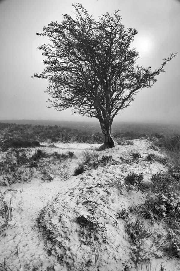 Download Mattina di inverno fotografia stock. Immagine di grande - 55363106