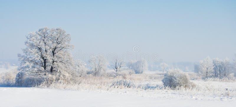 Mattina fredda fotografia stock