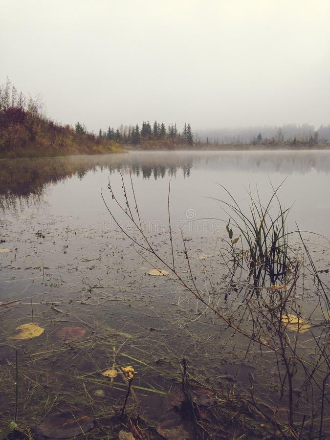 Mattina fredda della nebbia nel lago fotografia stock libera da diritti