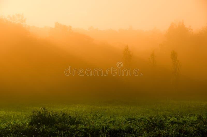 Mattina Mystical fotografia stock