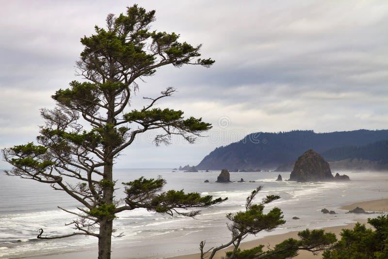 Mattina nebbiosa alla spiaggia Oregon di Tolovana fotografia stock libera da diritti