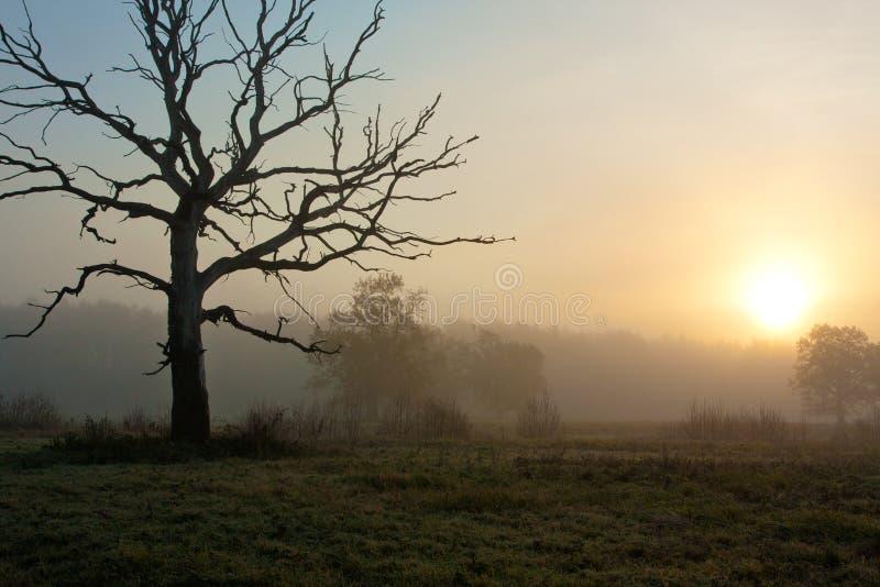 Mattina nebbiosa con l'albero fotografia stock