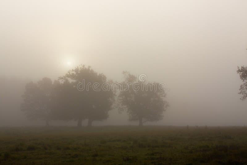Mattina nebbiosa con l'albero fotografie stock